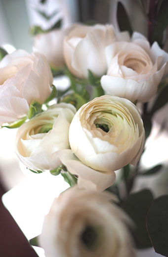 Visuel ambiance roses blanches